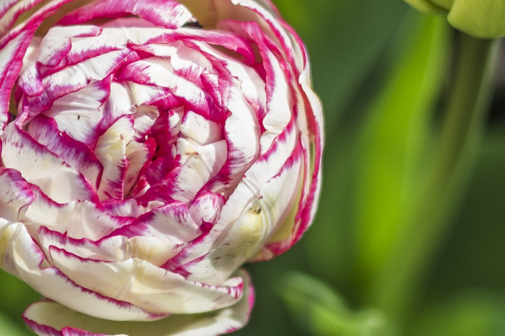 bloem-1
